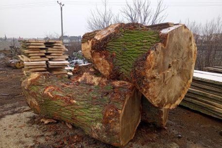 gulatina-tvrde-drevo-nadrozmer